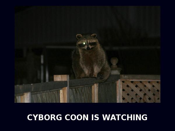 CYBORG COON