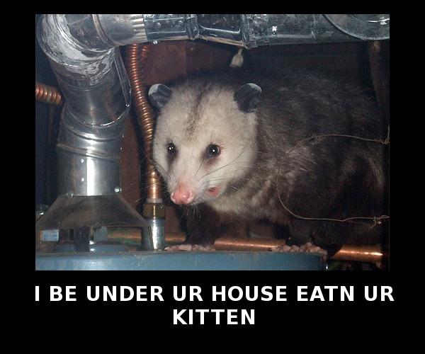 Eat Cat