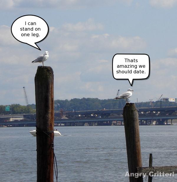 Date seaguls