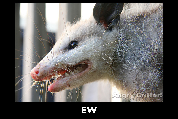 GROSS POSSUM