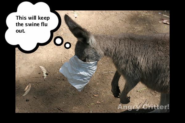 Kangaroo flu
