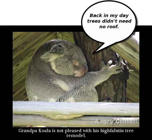 Koala remodel