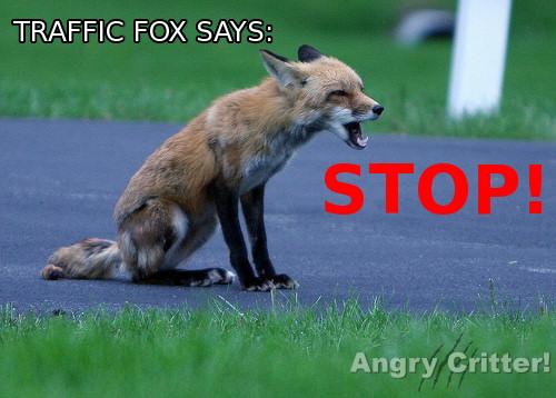 TRAFFIC FOX