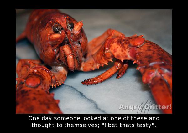 Tasty Lobster