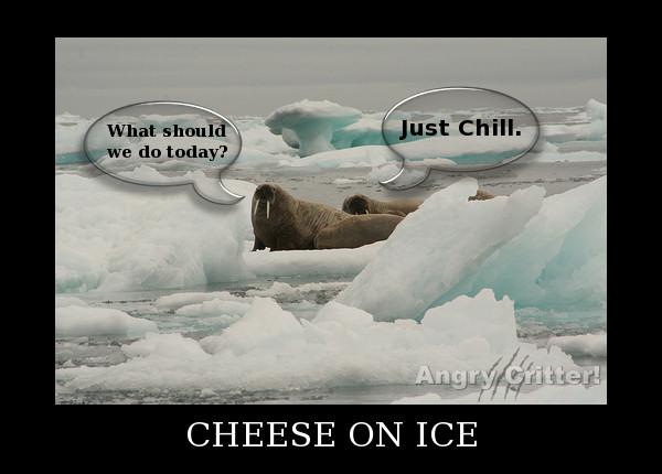 Walrus Chill