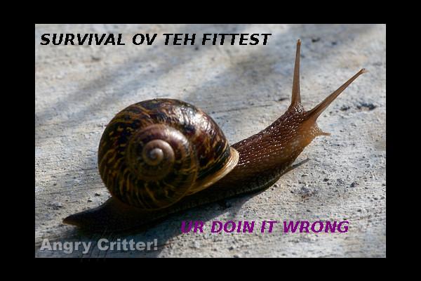 survival snail