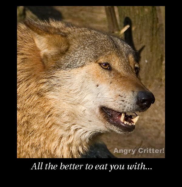 wolf eat