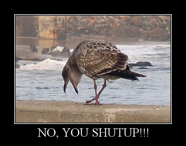 Bird Shout