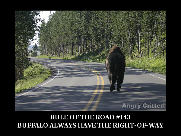 Buffalo ROAD RULE