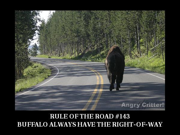 Buffalo ROAD RULE