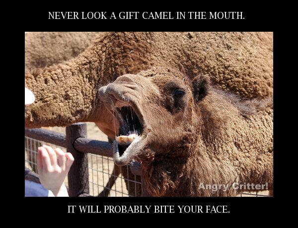 Camel BITE