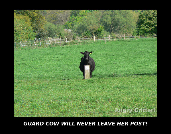 GUARD COW