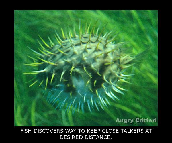 STAY AWAY FISH