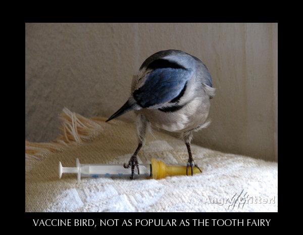 VACCINE BIRD