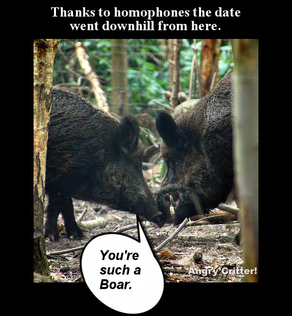 Wild boars date2