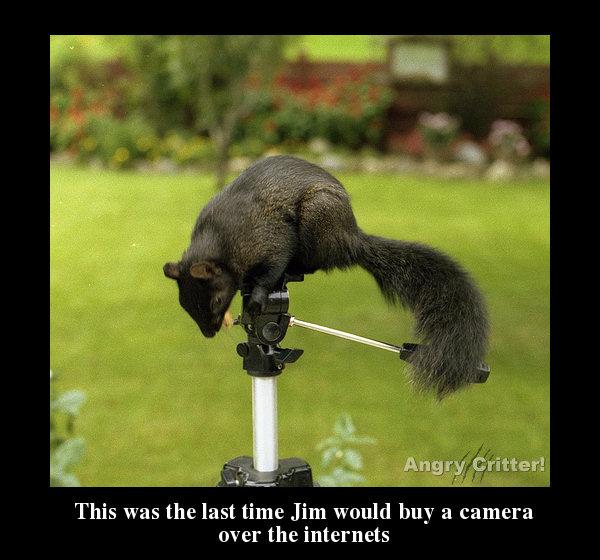 camera squrrel