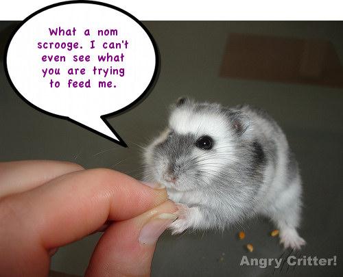 Hamster scrooge