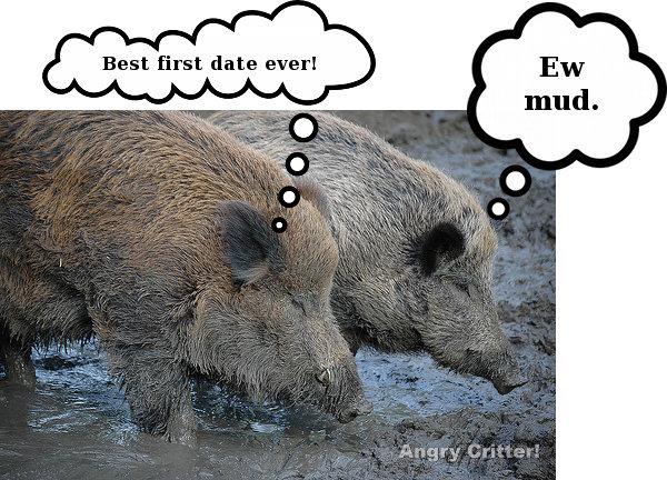 Wild Boars date