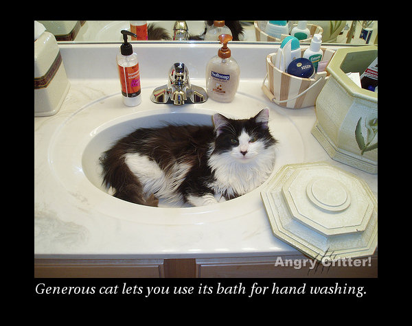 gen cat sink