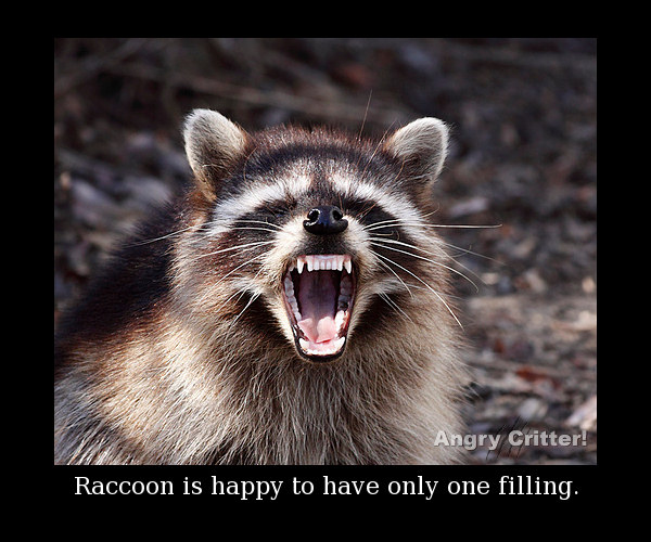 mouth coon filling