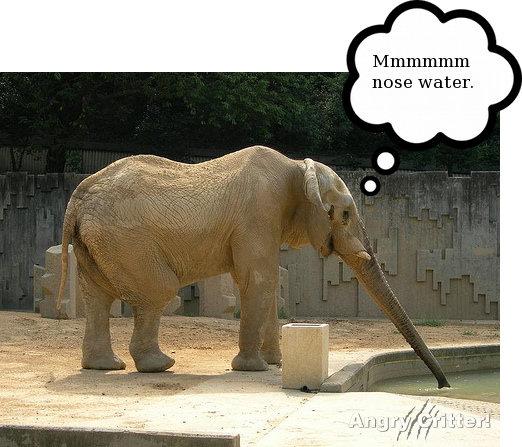 nose drink