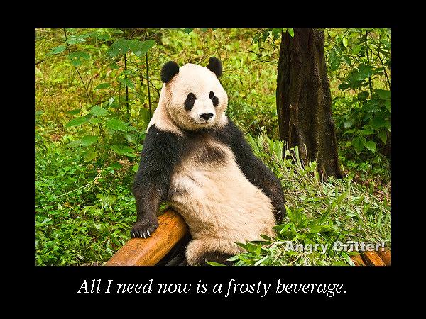 panda pose beverage