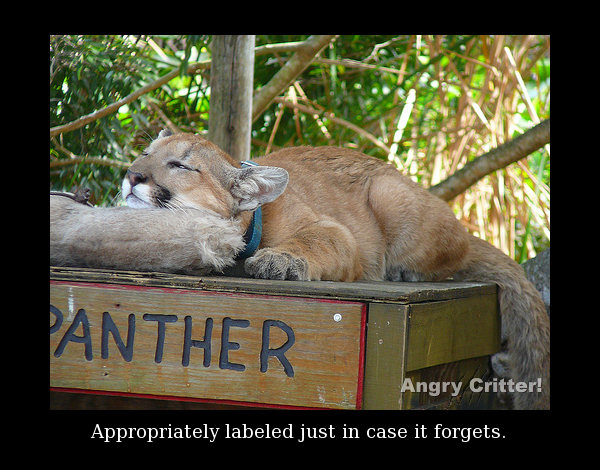 panther sign forget