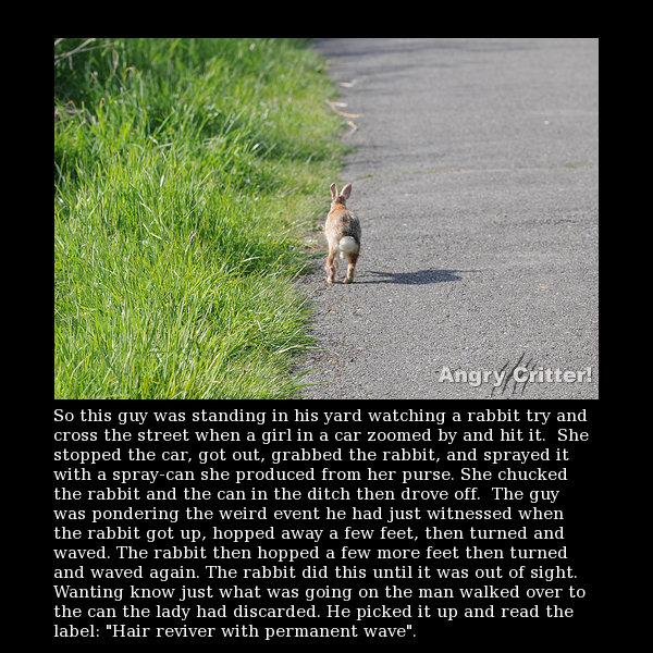 rabbit road joke