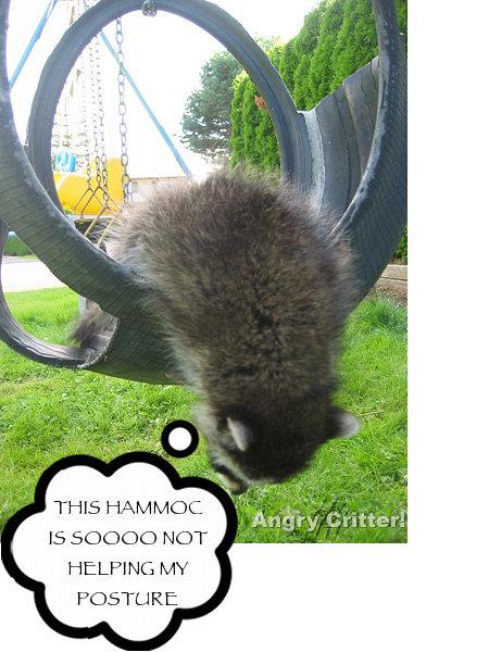raccoon POSTURE