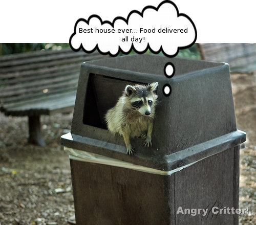 raccoon can house