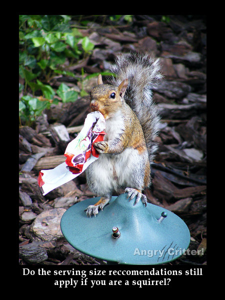 squirrel candy