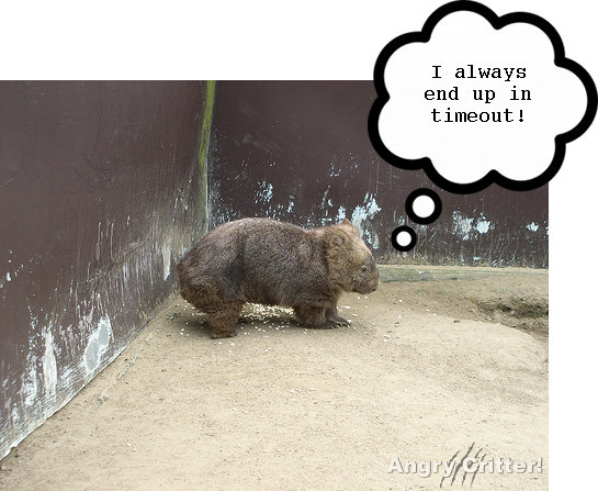 wombat time out