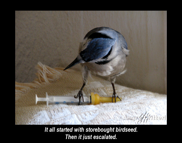 BIRD MED addict