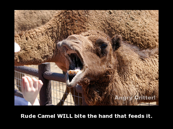 Camel Mouth rude