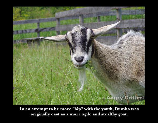 Goat dumbo