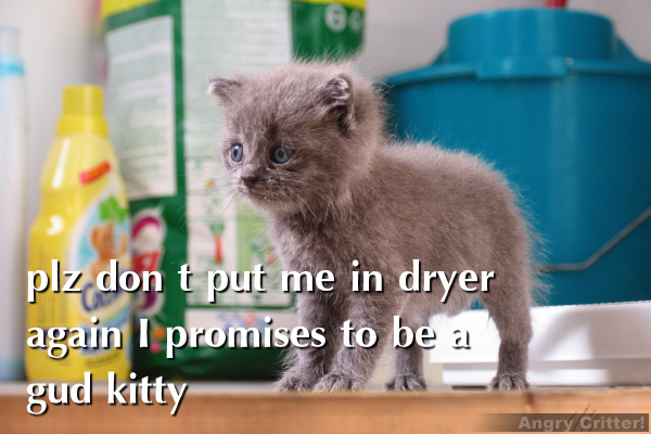 Never putty a kitty in the dryer, not even for a minute.