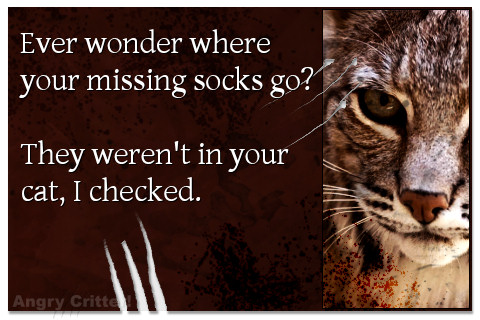 Bobcat helps you look for your missing socks.
