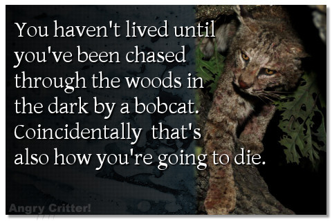 You haven't lived until you've been chased through the woods in the dark by a bobcat. Coincidentally, that's also how you're going to die.