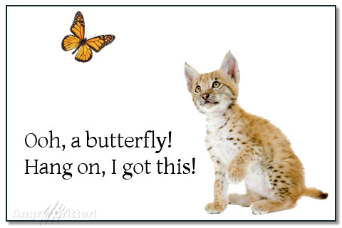 Ooh, a butterfly! Hang on, I got this!