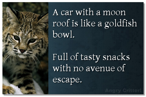A car with a moon roof is like a goldfish bowl. Full of tasty snacks with no avenue of escape.